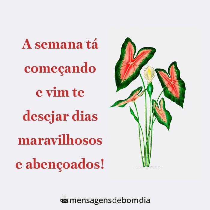 Mensagem De Boa Semana Mensagens De Bom Dia Bom Dia Com Flores