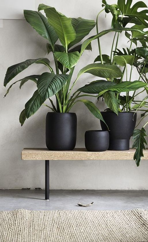 Kurken bank met urban jungle in matte zwarte plantenpotten