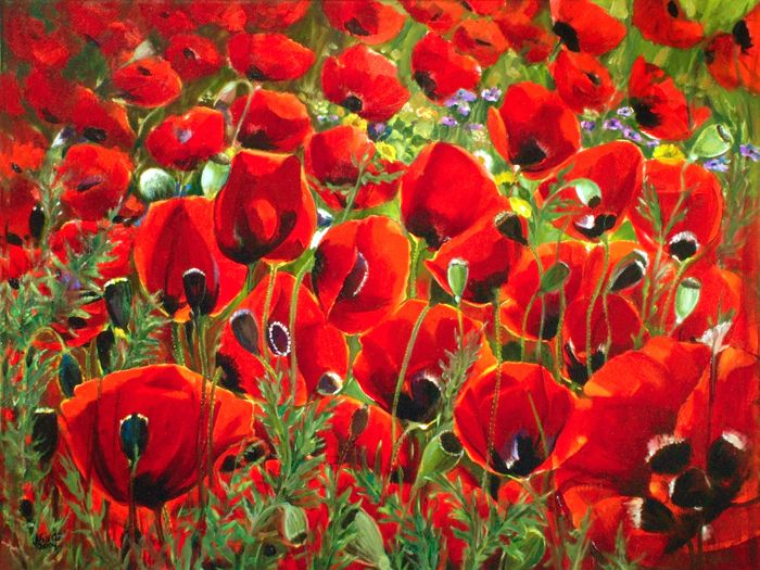 poppies flowers | palestinian poppies beautiful poppy flowers dominate the palestinian ...