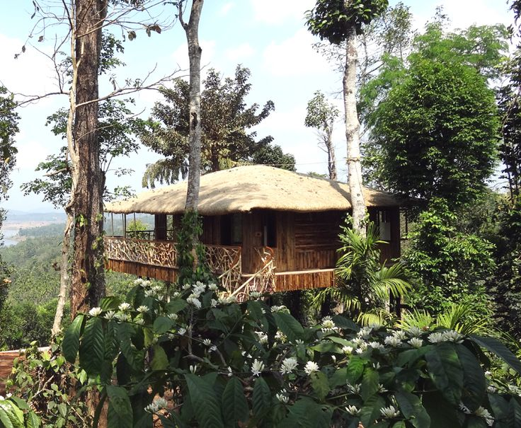 The tree-house at Amaryllis in Wayanad, Kerala