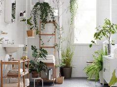 8 növény, amely nagyon szívesen él a fürdőszobában