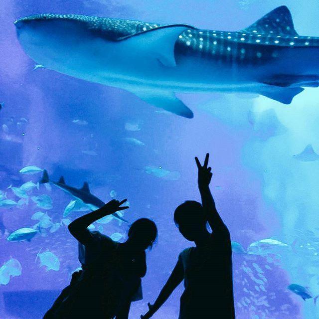 【sotetu310】さんのInstagramをピンしています。 《修学旅行 IN 沖縄🌴 、 美ら海水族館のジンベイザメ可愛かった💕 楽しかった~(*^^) 、 #ジンベエザメ ザメ #美ら海水族館 #水族館 #修学旅行 #沖縄 #アクアリウム #魚 #fish #aquarium #okinawa #travel #travelgram》