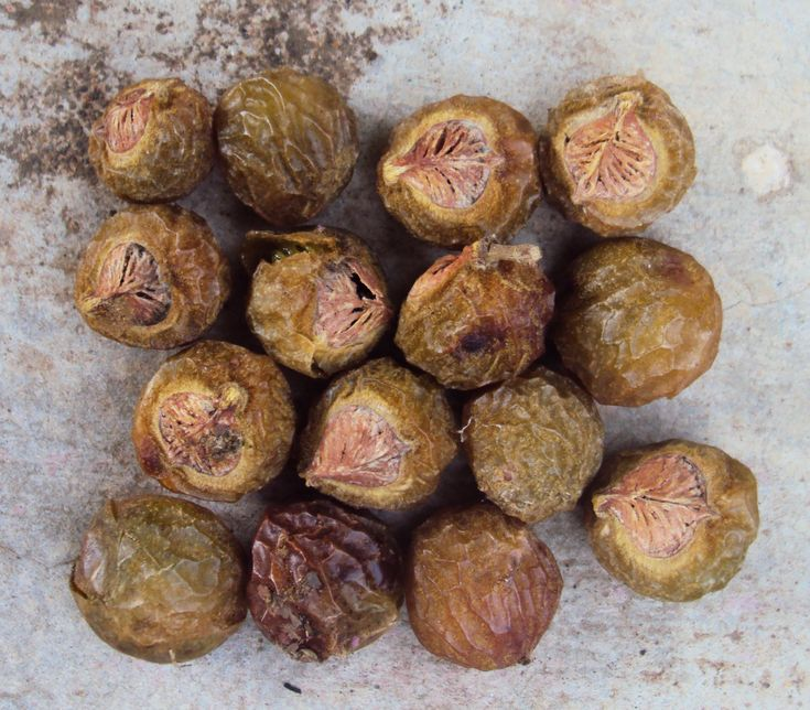 Ritha, Aritha Or Soap Nuts - The 100% Natural Detergent And Cleaner - Its Benefits And Uses And  Many Health Benefits