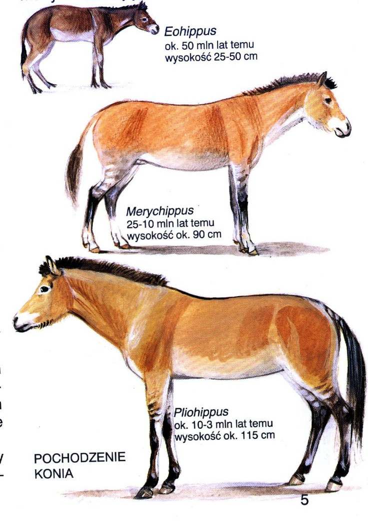 Prehistoric horse.