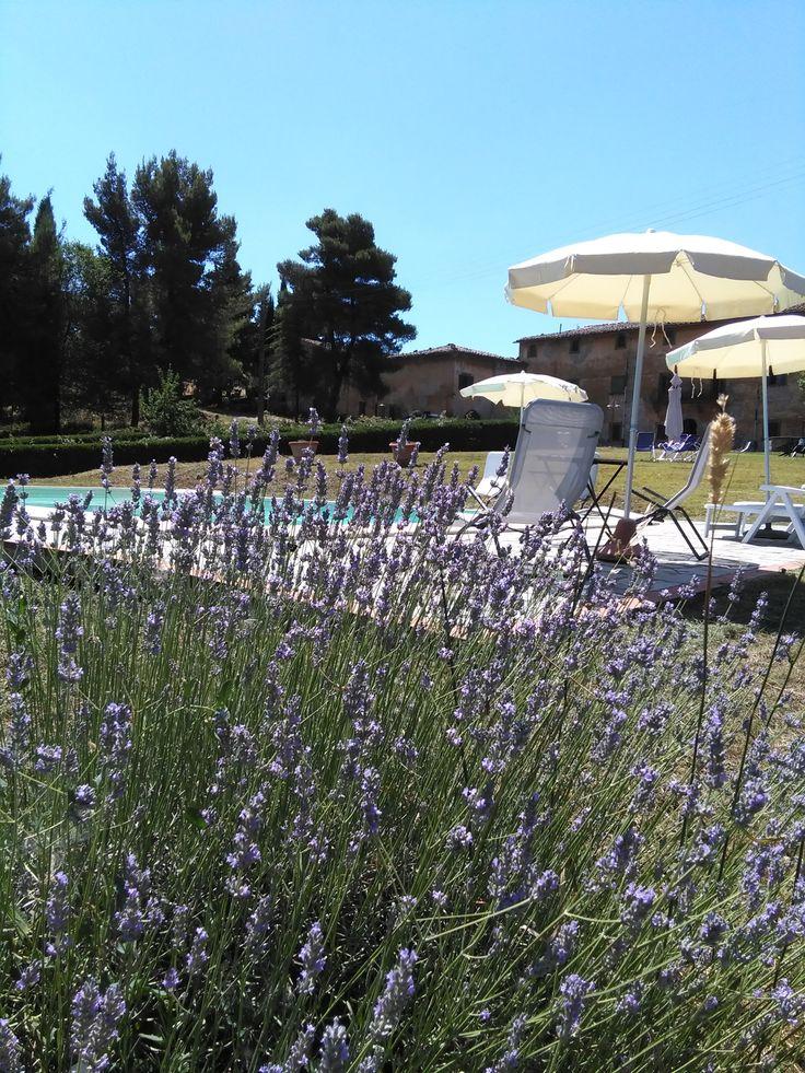 profumodilavanda in #agriturismo a #scornello vicino a #Volterra per una #vacanza in pieno #relax sul bordo della #piscina