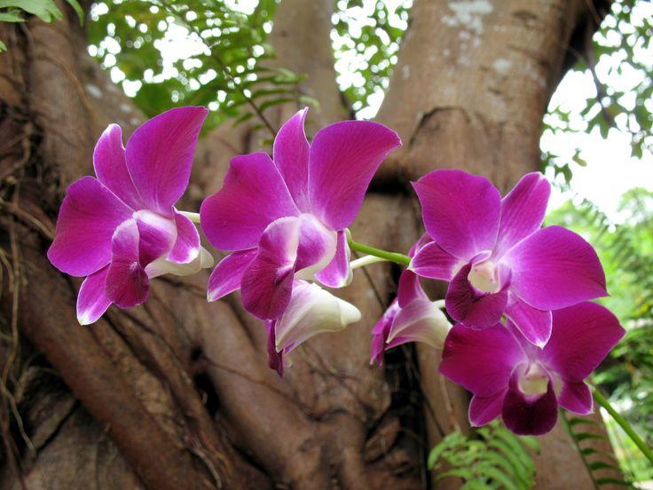 Orquídea lilás. Comercializamos vários tipos de orquídeas, excelentes flores para presentear. Agradam e fazem muito sucesso. Consulte www.floresnaweb.com