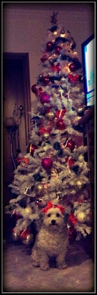 Penny dog ... Merry Christmas xo xo xo !!!