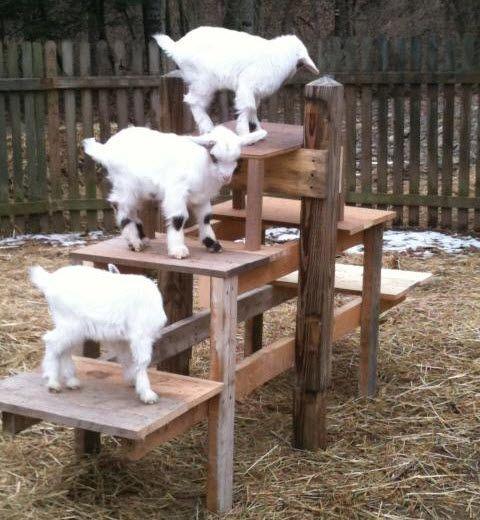DIY Goat Tier Platform - PetDIYs.com