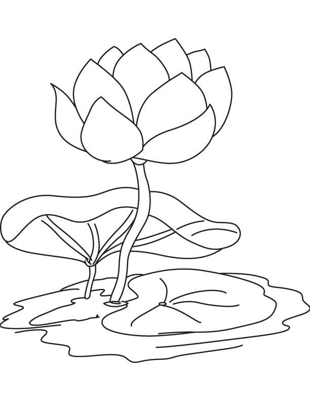 Lily Pad Lily Pad On The Middle Of Pond Coloring Page Lotus