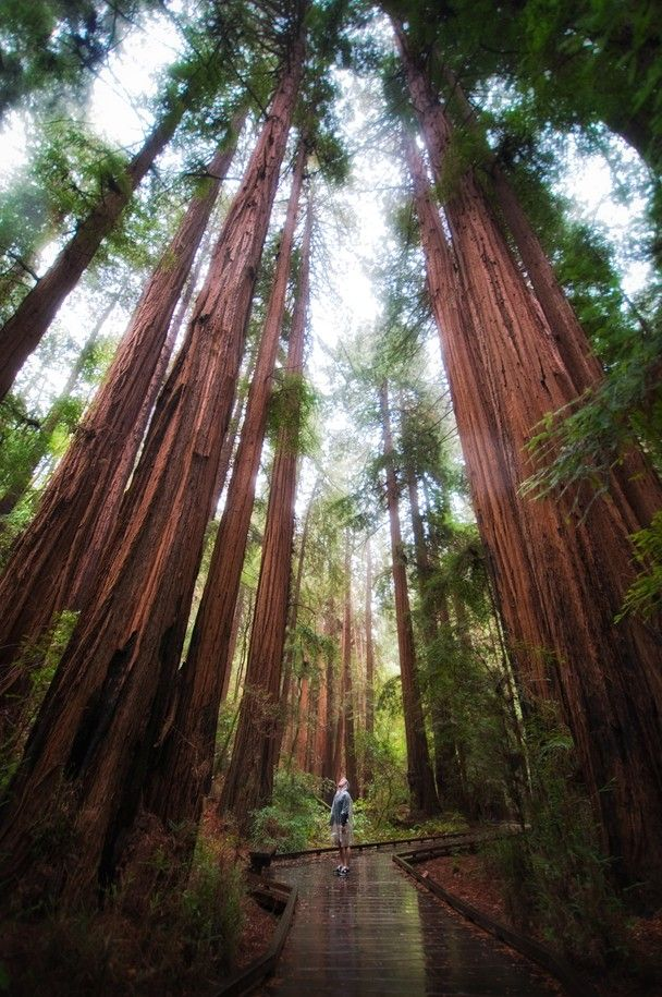Muir Woods - Basque in the shadows of these transcendental giants.