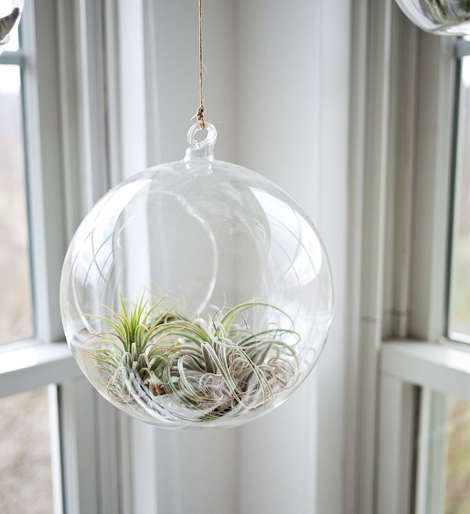 Plantenhanger | glazen bol