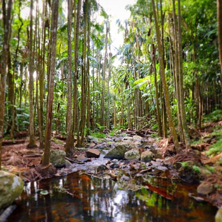 Re-acquaint yourself with nature at Curtis Falls in Tamborine Mountain National Park.   17 Amazing Places To Go On The Gold Coast That Aren't The Beach