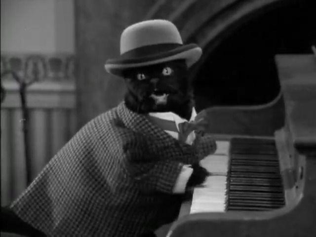 Salem Saberhagen/Gallery | Videos de gatos divertidos, Salem el ...