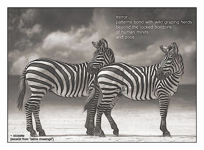 Zebra crossings © Nicolette van der Walt