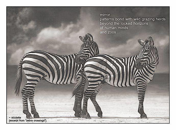 Zebra crossings © Nicolette van der Walt