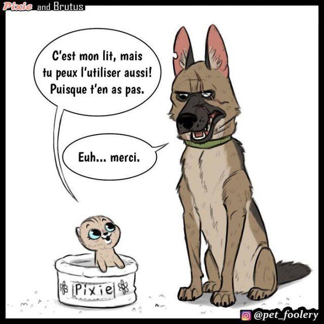 Ces bandes dessinées adorables et hilarantes à propos de Brutus et Pixie vont …