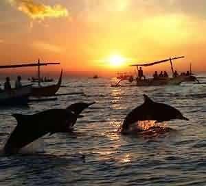 Dolphins, Bunaken Marine National Park, Manado, Indonesia