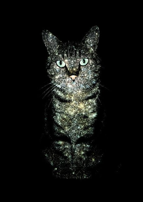 Galactic Cat - Awesome design!