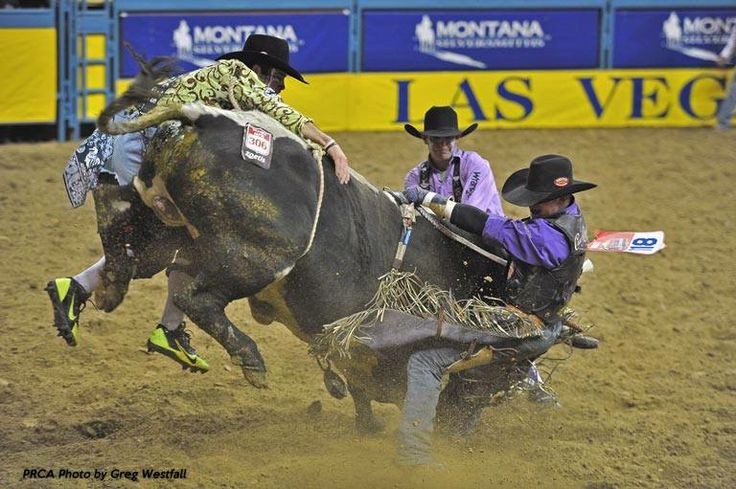 More bullfighter fun with Steve Woolsey vs. Shorty D ...