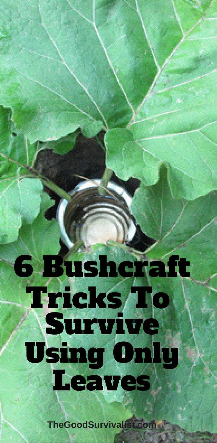 In this post we look at 12 Bushcraft Tricks To Survive Using Only Leaves.  Hopefully what you learn here will give you those skills. Make sure you watch the video at the end of this article.   http://www.thegoodsurvivalist.com/12-bushcraft-tricks-to-survive-using-only-leaves/