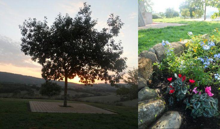 Pi di 25 fantastiche idee su alberi da frutto per - Alberi frutto giardino ...