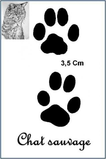 Chat sauvage (Felis silvestris)