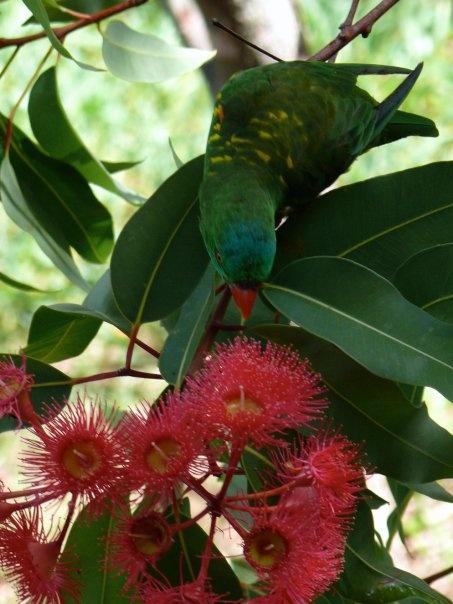 """Thoughts of a bird """"Yummy yummy nectar, yummy yummy nectar.  Buzz of hummingbird.  Yummy yummy nectar."""""""