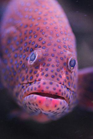 Ontwerp 1:Dit is een grappige vis die ik wil gebruiken bij mijn ontwerp waarbij dieren uit het water komen en je precies hetzelfde in  je blad ziet. 1-12-2015