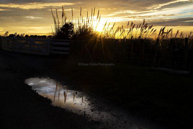 Sunrise at Glenburn Station | © Elyse Childs Photography