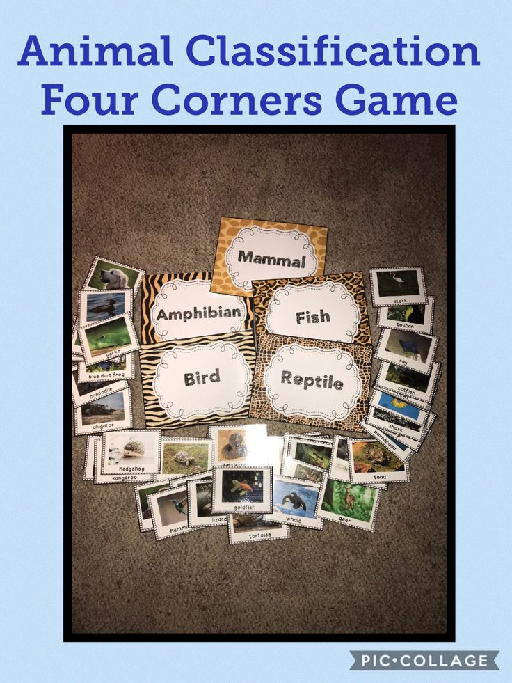Animal Classification Four Corners Game.  So much fun!