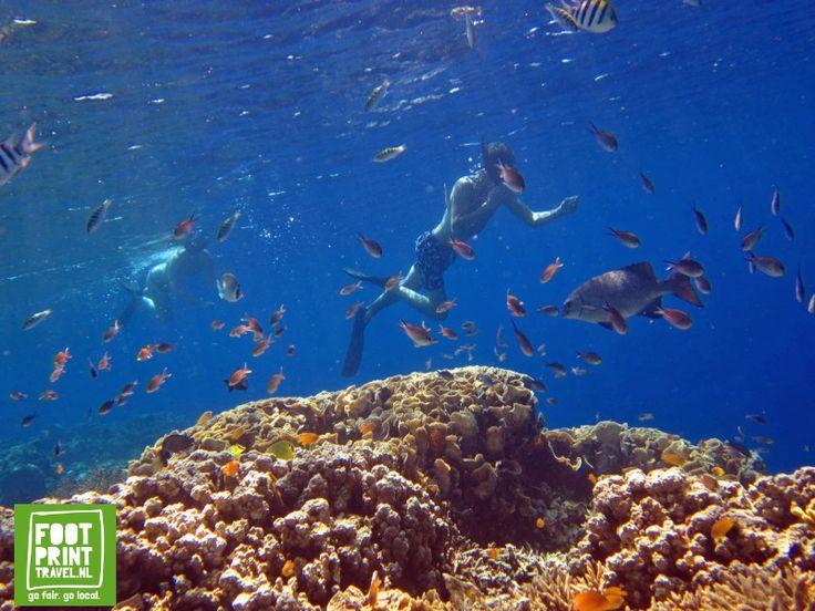 Snorkelen #Menjangan eiland bij #Pemuteran.#Bali