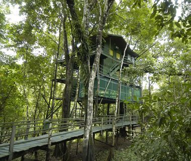 Ariau Amazon Towers Hotel, one of the largest commercial tree-house hotels in the world, 35 miles from the Amazon gateway city of Manaus. Ac...