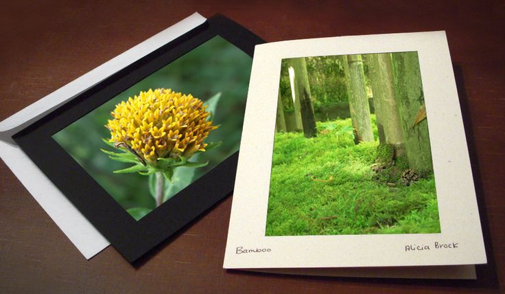 Make money doing what you love by selling greeting cards of your nature photography. See why blank photo insert cards are an artistic yet economical option.