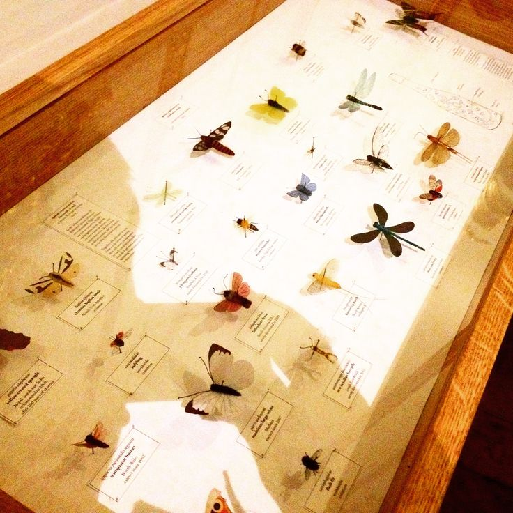 Beautiful case displaying the laser cut and hand embroidered insects inside of #curiositycloud by #mischertraxler @vamuseum #art #design #installation #lighting #london #museum #photography #hekkta #insects