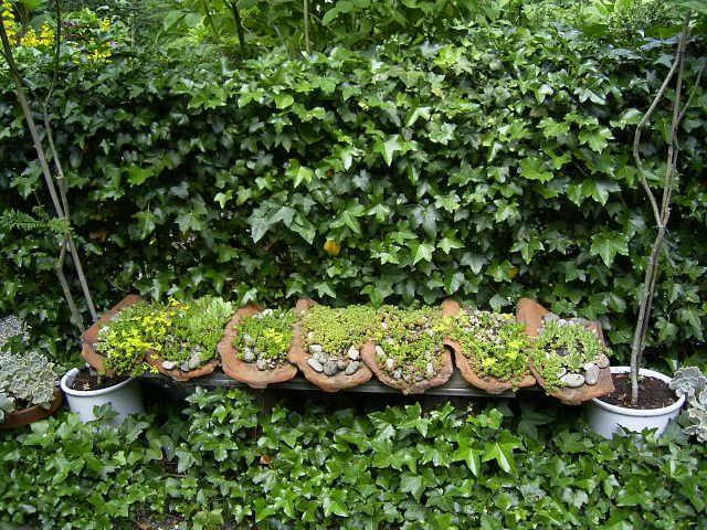 Oude dakpannen doen nog dienst als ondergrond voor vetplanten.