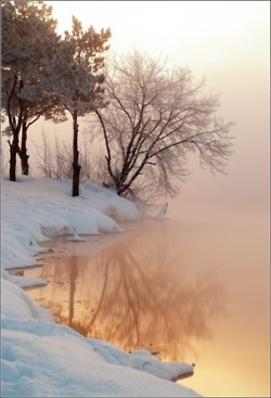 Snow, trees and water landscape photo