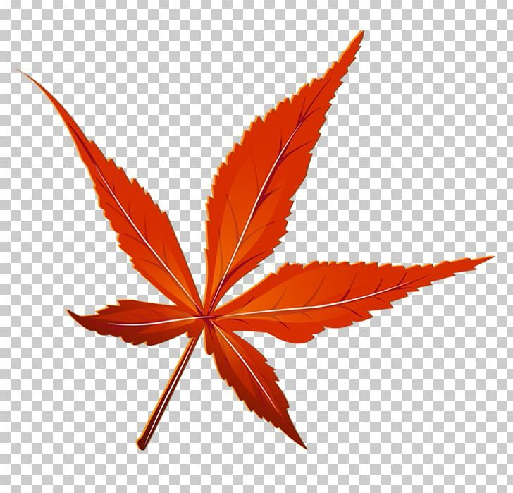 Maple Leaf Png Autumn Clipart Clip Art Fall Graphics Clip Art Maple Leaf Png