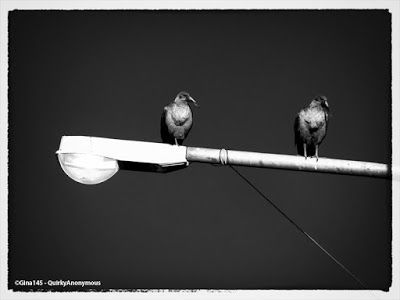 Quirky Anonymous: Birds on a Street Light