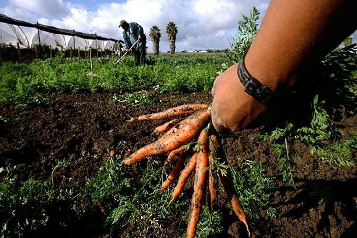 Dalla Toscana un contributo alla Legge sull'agricoltura biologica