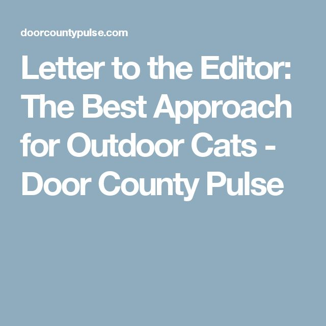 Letter to the Editor: The Best Approach for Outdoor Cats - Door County Pulse