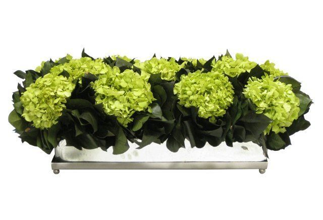 """Bougainvillea 