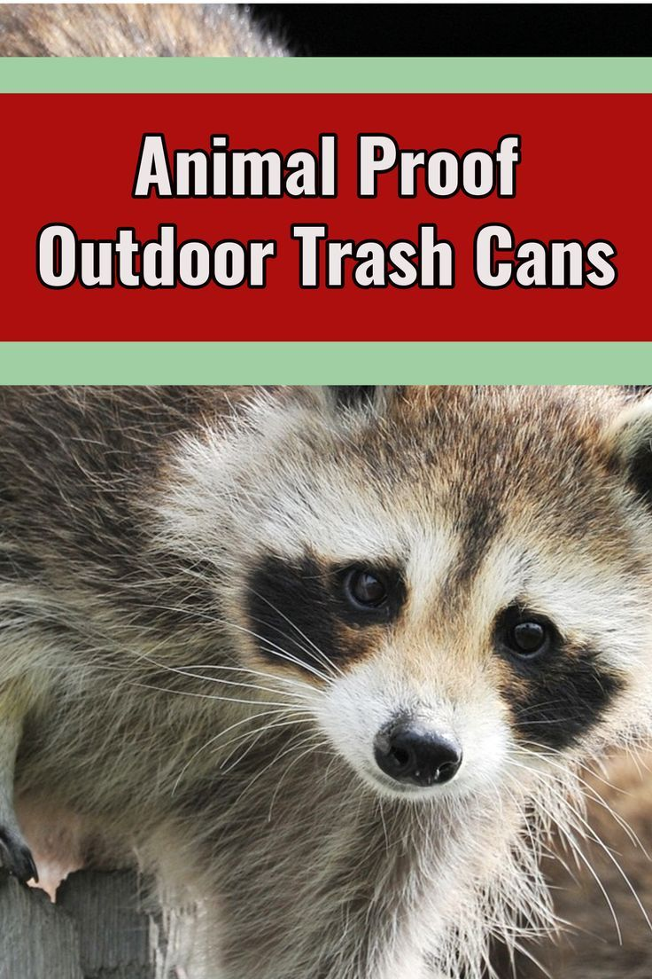 Outside Trash Can Storage Ideas Animal Proof Garbage Cans Dog