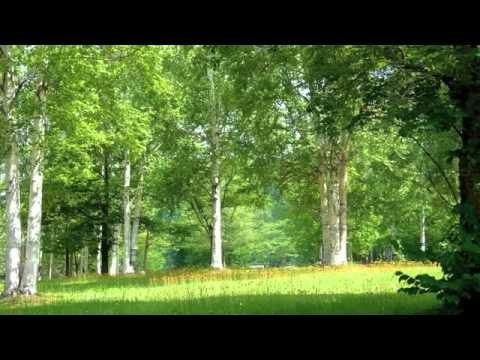 Звуки Природы. Пение птиц - Соловей - Голоса птиц.