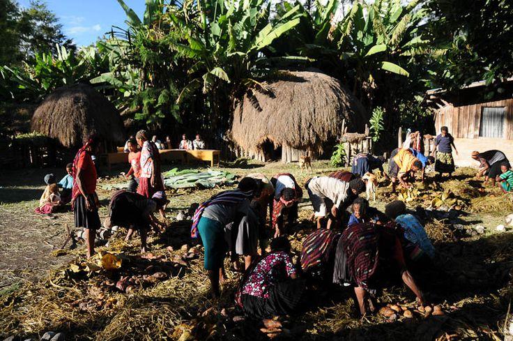 Dani tribe, Baliem Valley, West-Papua, Irian Jaya, Indonesia, Easter, Indonesien, Ostern, Baliem-Tal