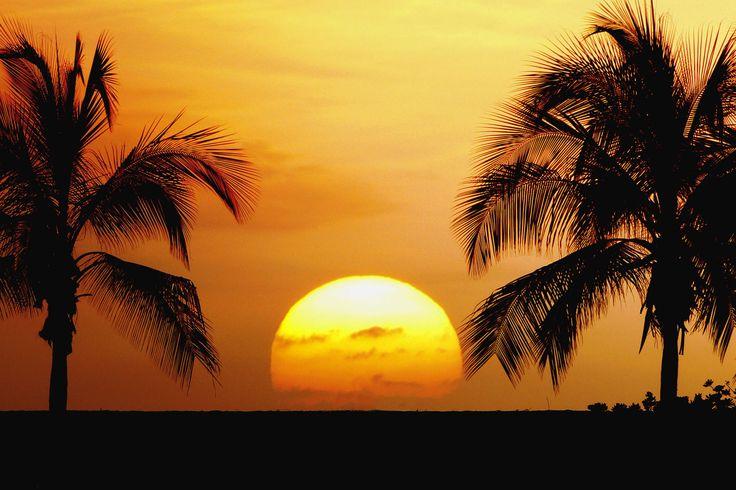 Tropics Palm Trees Sun Beach 4k Hd Desktop Wallpaper For: Tropical Beaches With Palm Treesbeaches Beautiful Palm