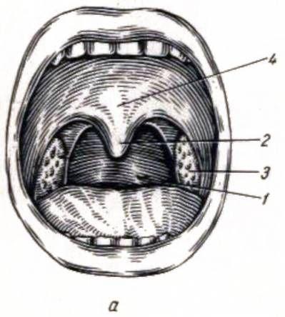 Черепно-лицевая хирургия, челюстно-лицевая хирургия