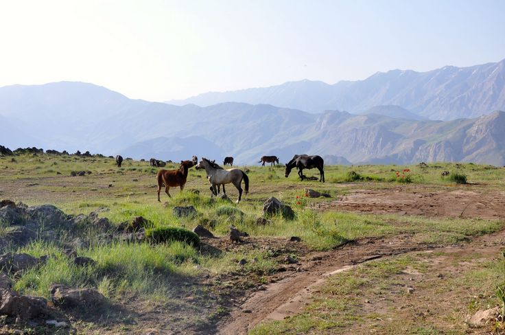 https://flic.kr/p/A1xncz | Horses on the slopes of Mount Damavand