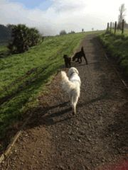 Dog walking spots in Auckland