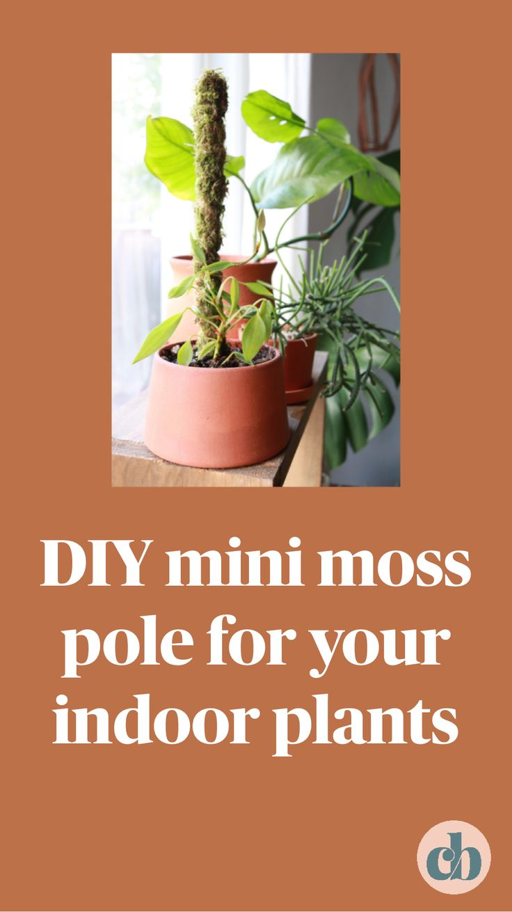 Diy mini moss pole for your indoor plants an immersive