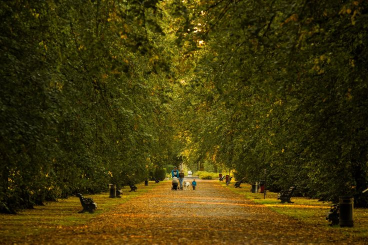 Summer park walk by Conor Clarke on 500px